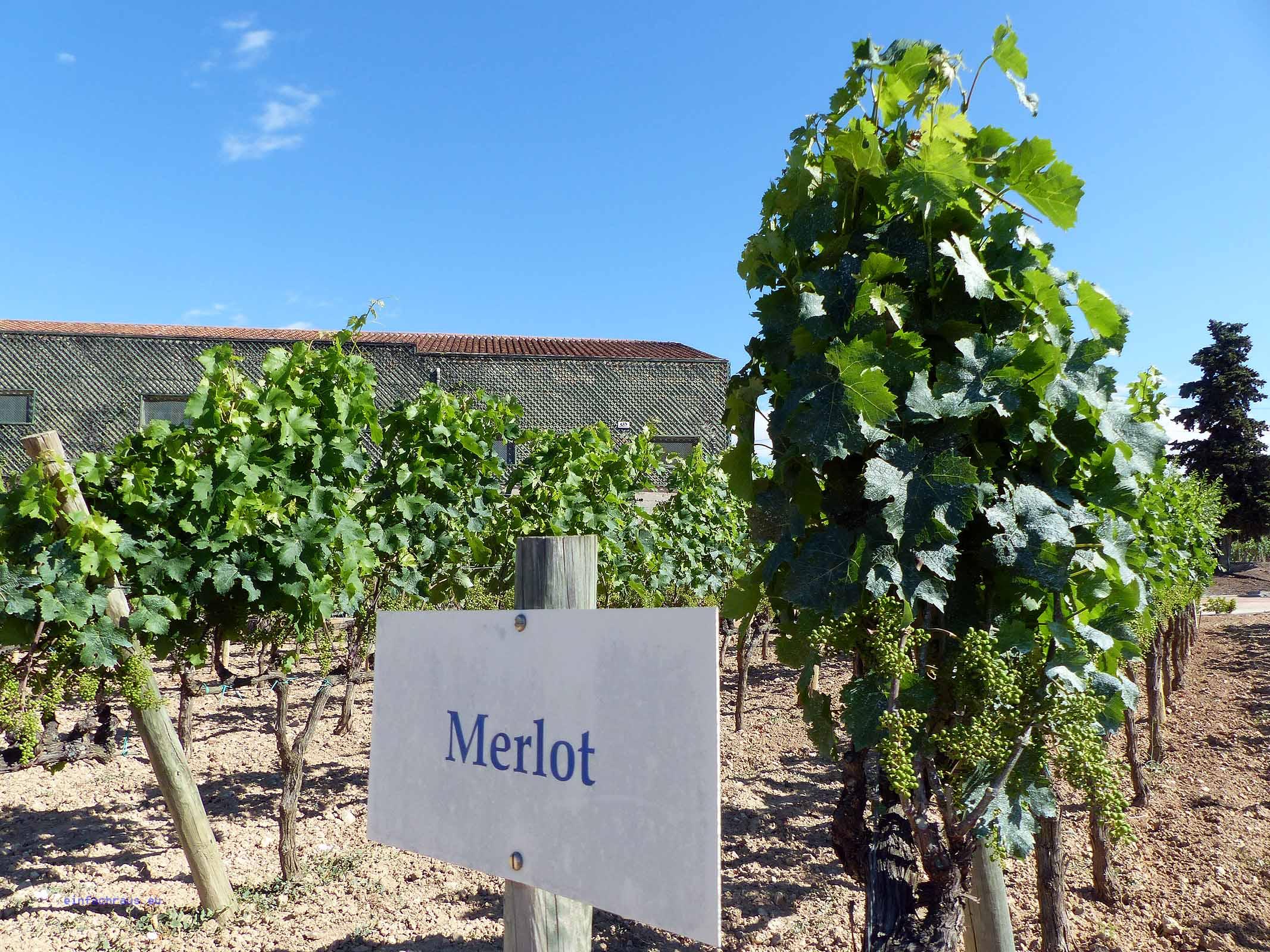 Weingut Jean Leon in Katalonien