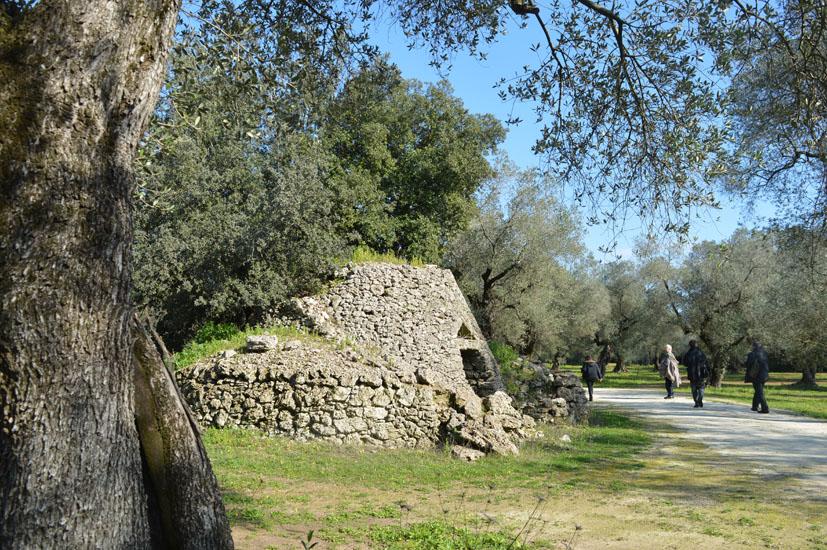 Olivenbäume mit dem für Apulien typischen Trulli