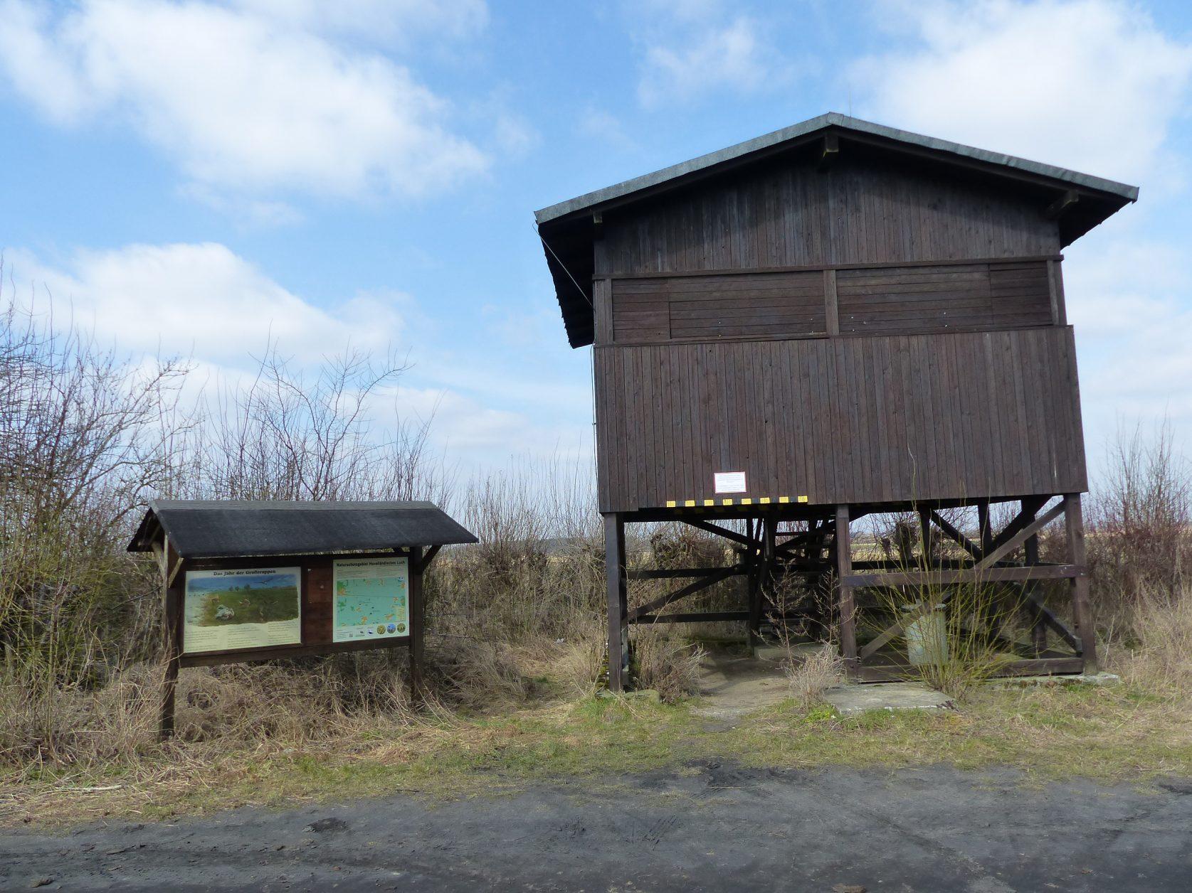 Grosstrappen-Havelland (58)