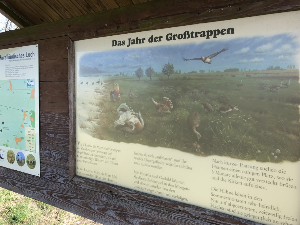 Grosstrappen Havelland