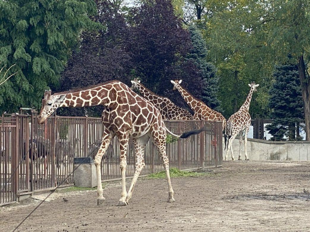 Breslau, Wroclaw Zoo, Polen