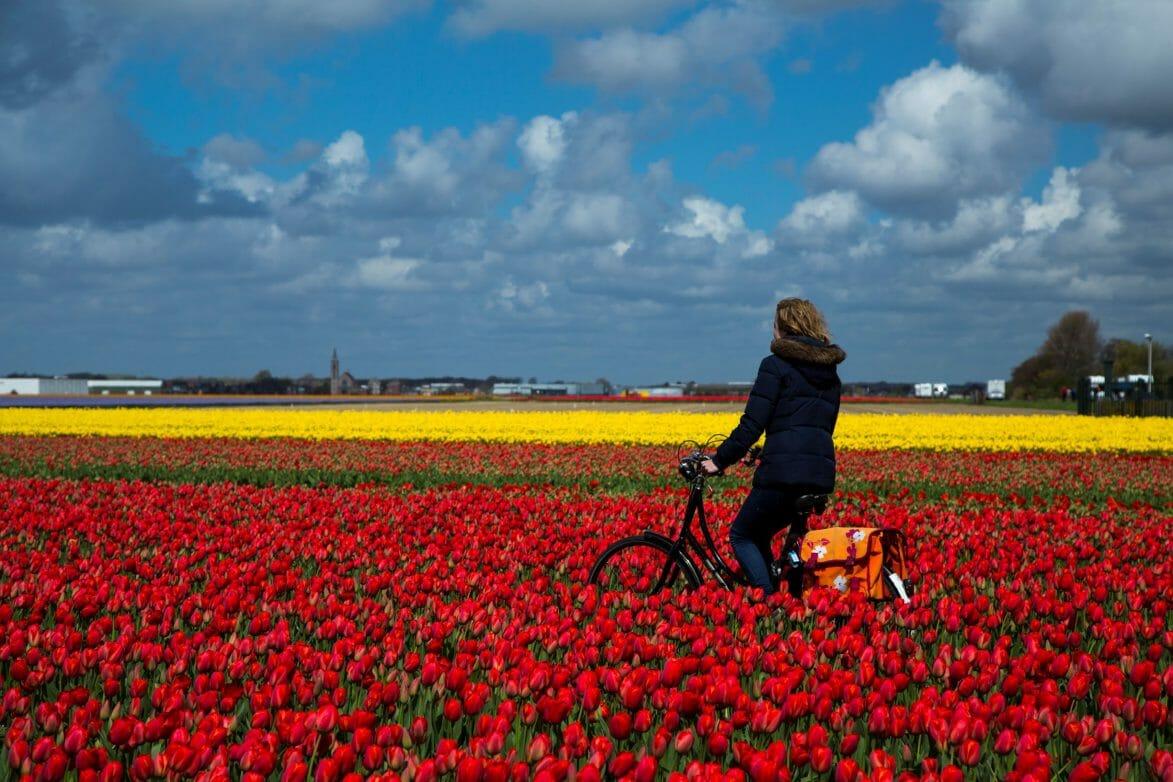 mit dem Rad durch Blumenfelder