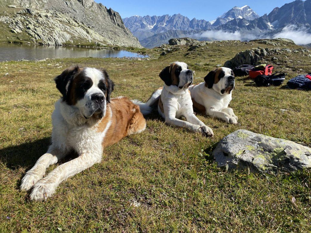 Schweiz.Barry.Hund